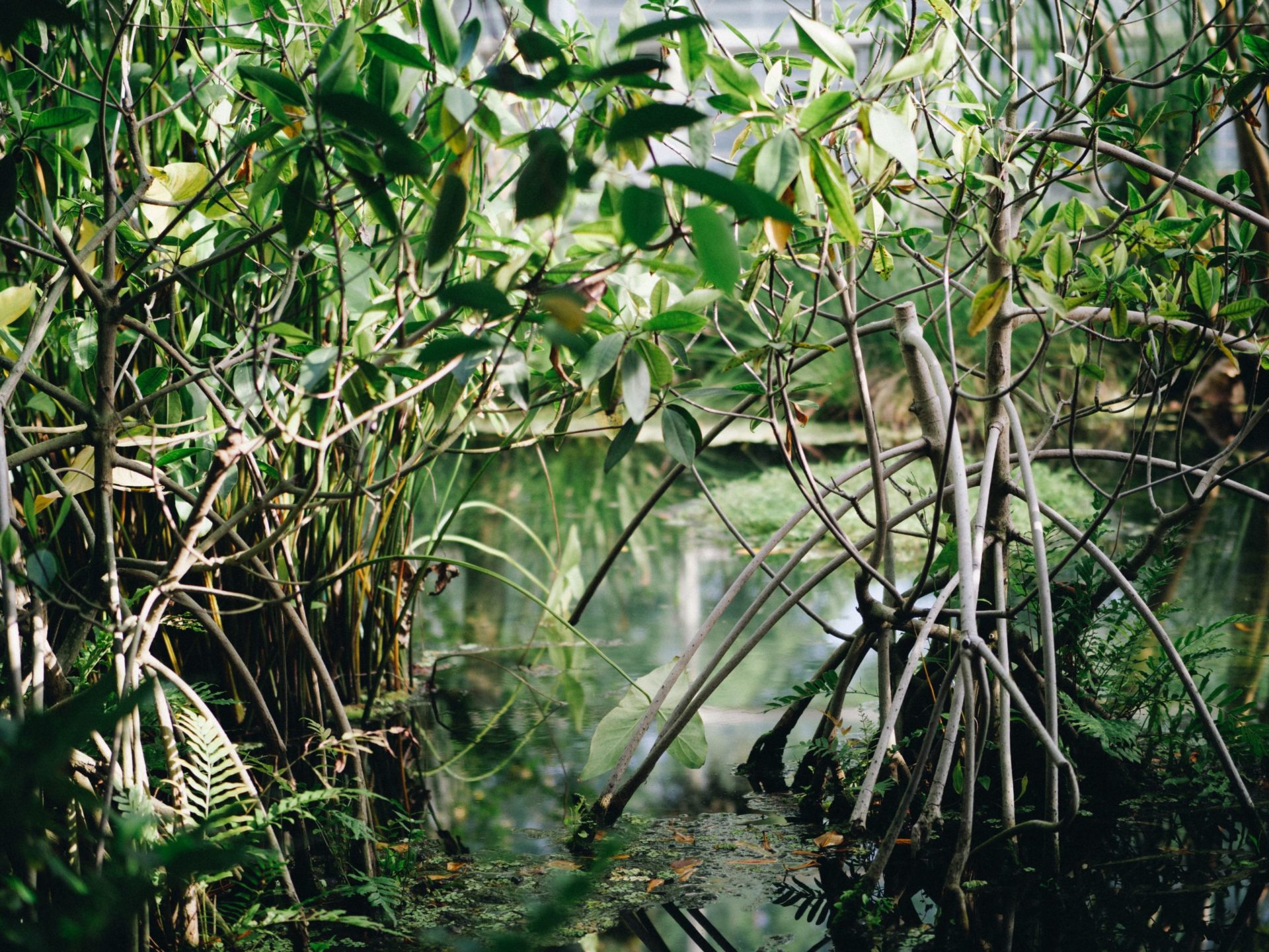 Marvellous Mangrove Forests