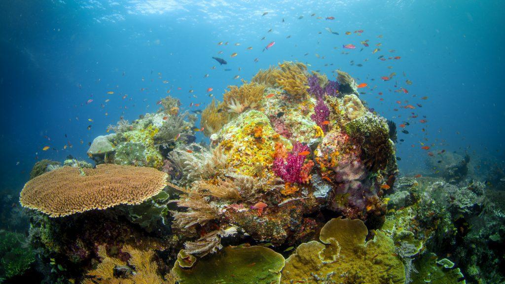 Amazing Biodiversity of Raja Ampat