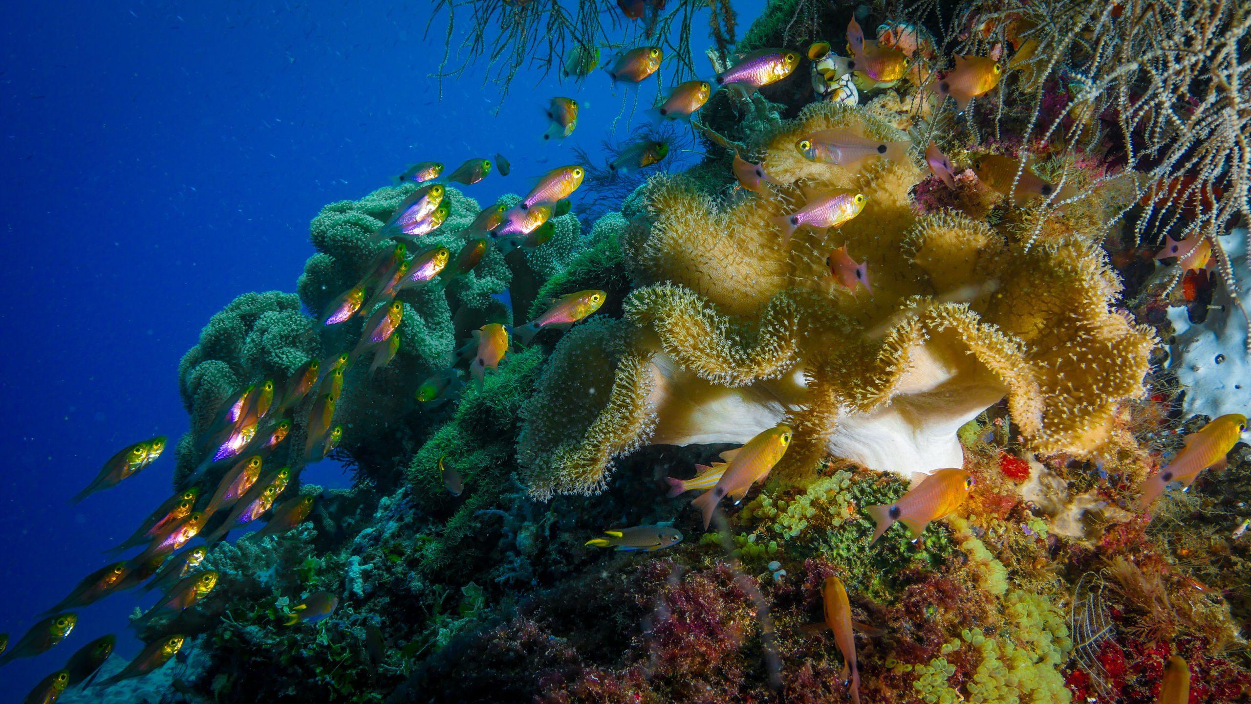 Incredible Schooling Fish
