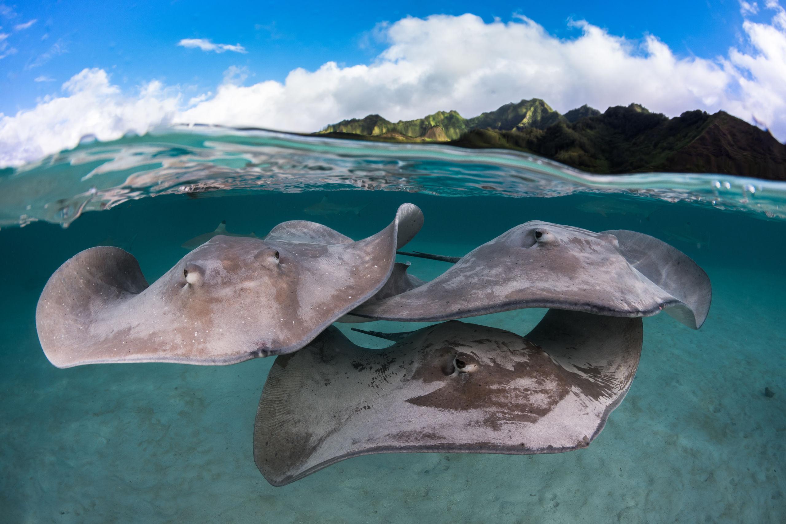 Bora Bora Manta Ray Initiative