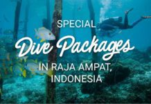 Special Dive Packages in Raja Ampat