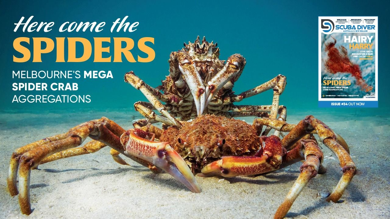 Scuba Diver ANZ Issue 34 Out Now