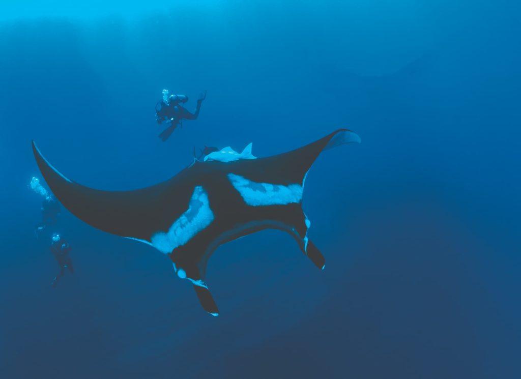 diving socorro 4