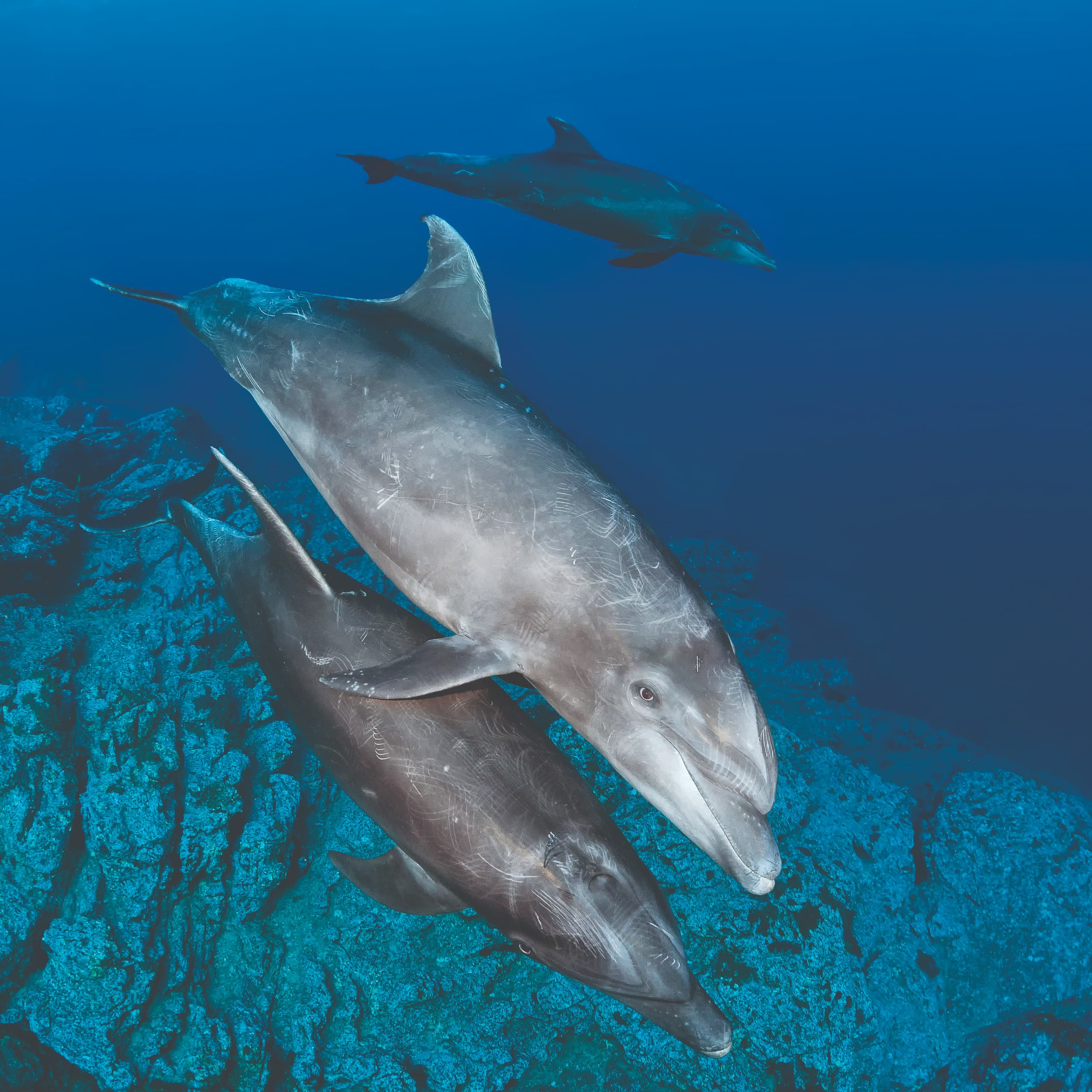 Bottlenose dolphins at Cabo Pearce