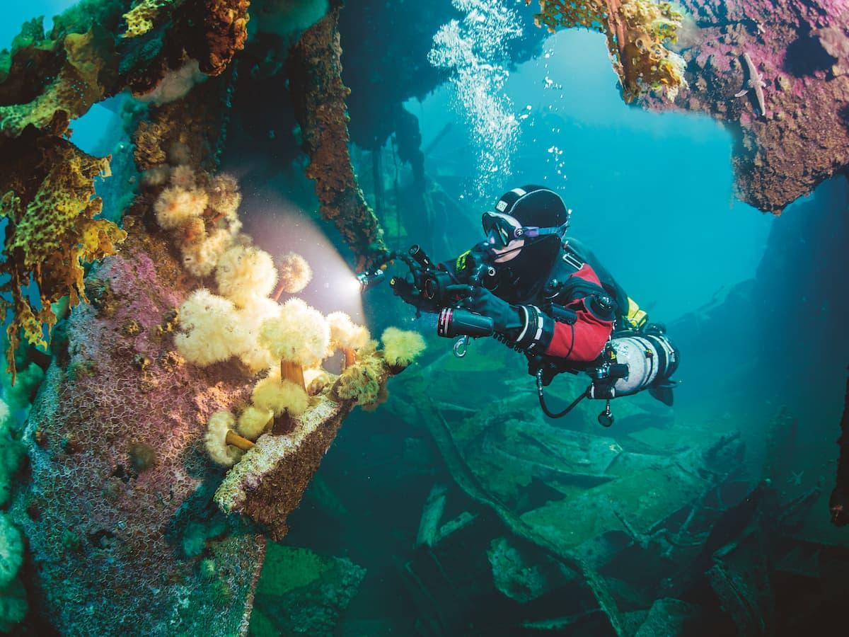 Diving Newfoundland 5