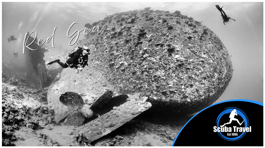 Scuba Travel, Red Sea, Liveaboards, Whirlwind
