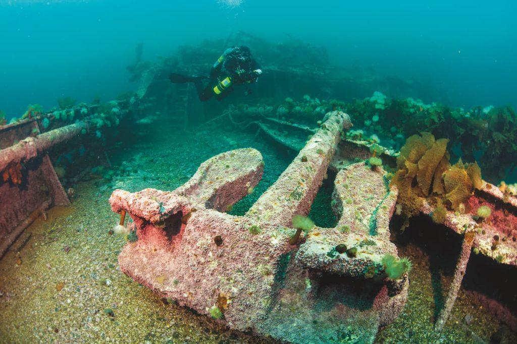 Diving Newfoundland 6
