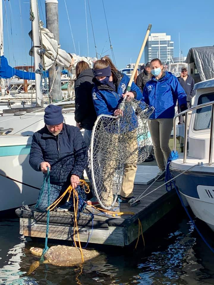 The team from Virginia Aquarium and Marine Science Center responded to a call for assistance