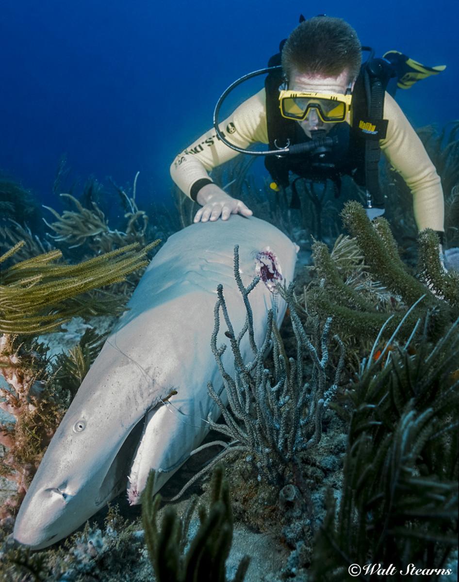 definned shark