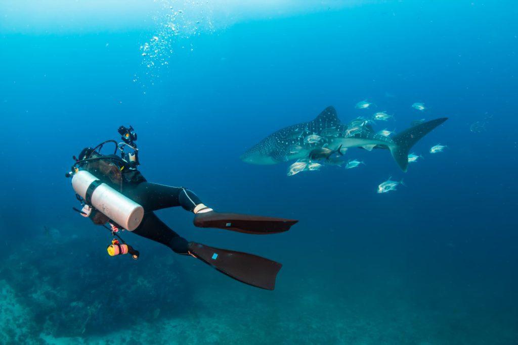 diving socorro 3