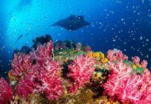 Fantastic Rays of the Andaman Sea