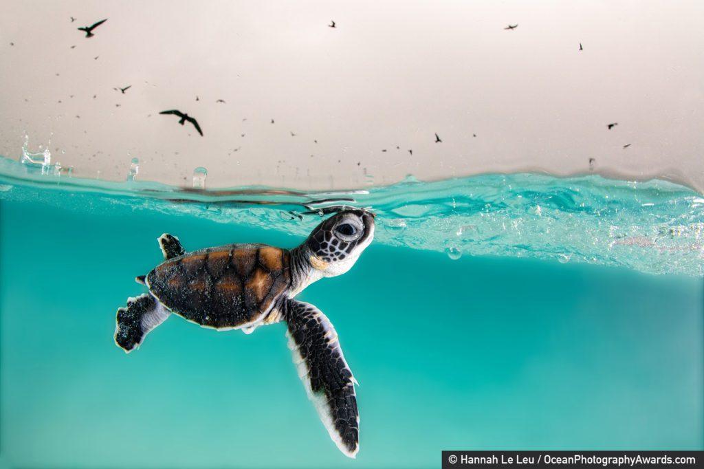 Ocean Photography Awards 4