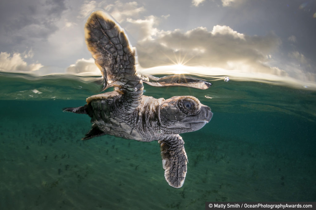 Ocean Photography Awards 2