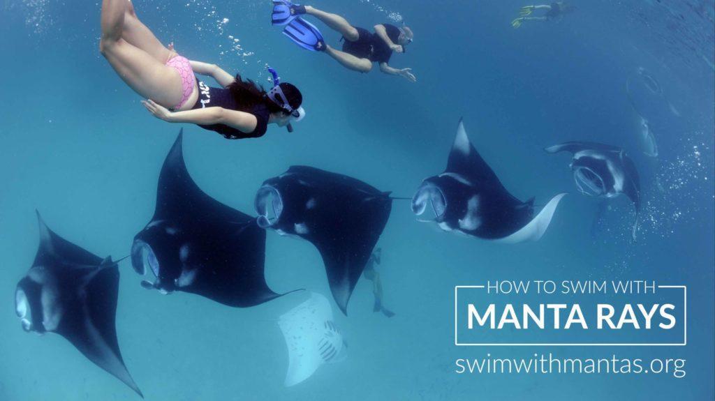 Swim with mantas