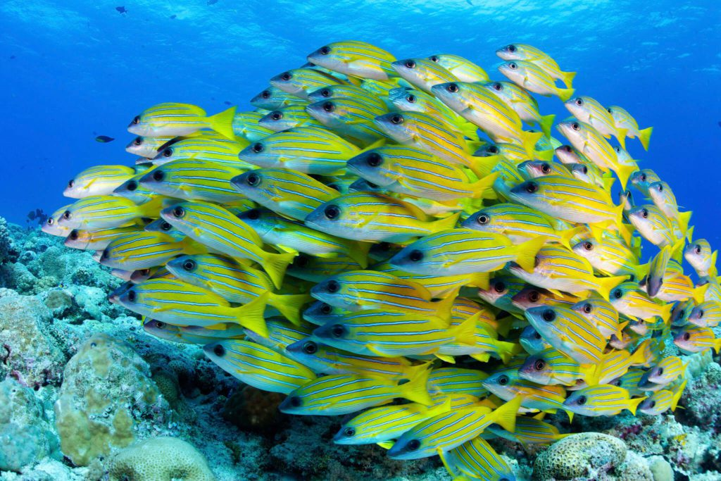 Largest Coral Reef Survey in History