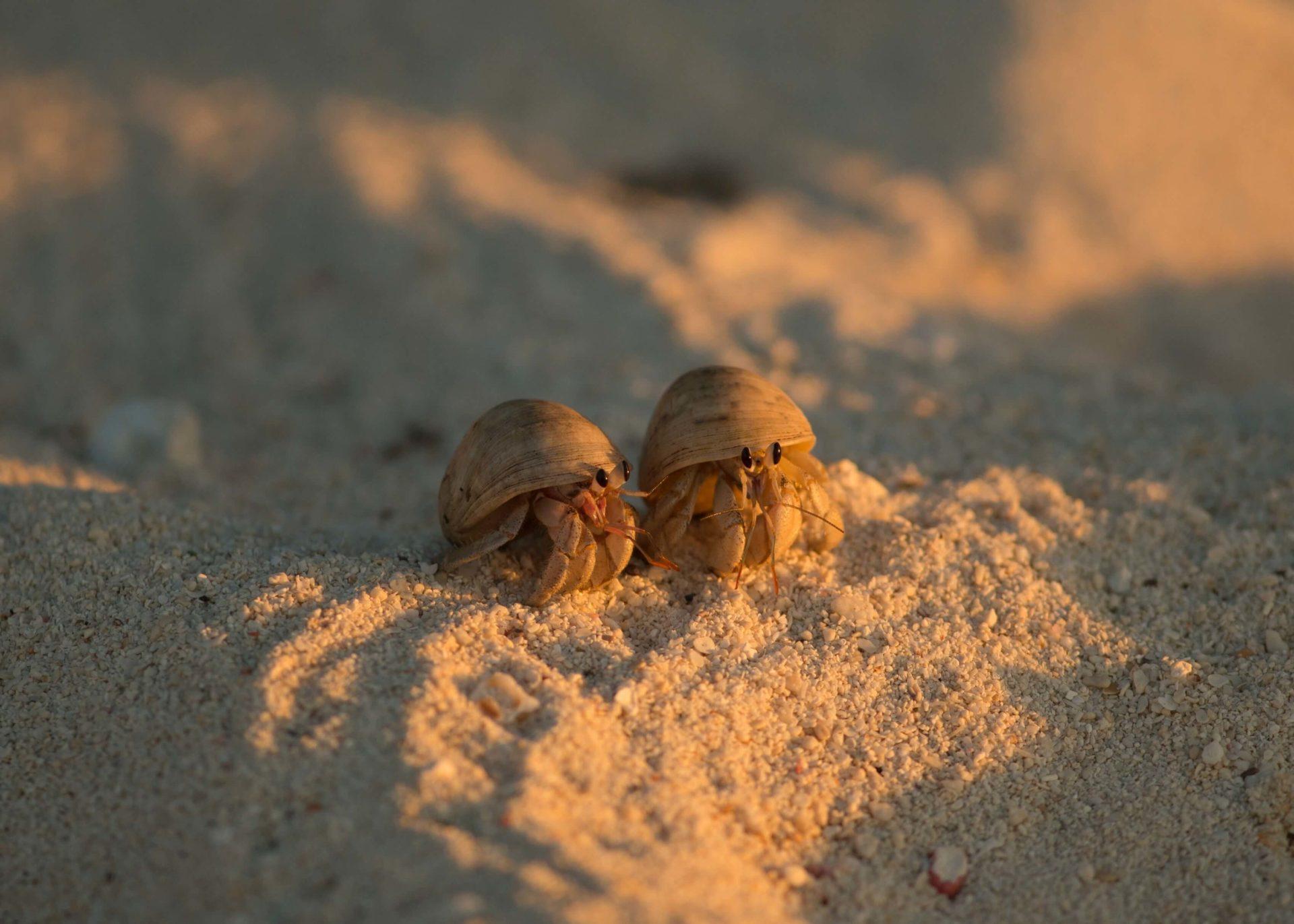 Fascinating Hermit Crabs