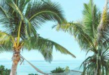 Fiji Reopening