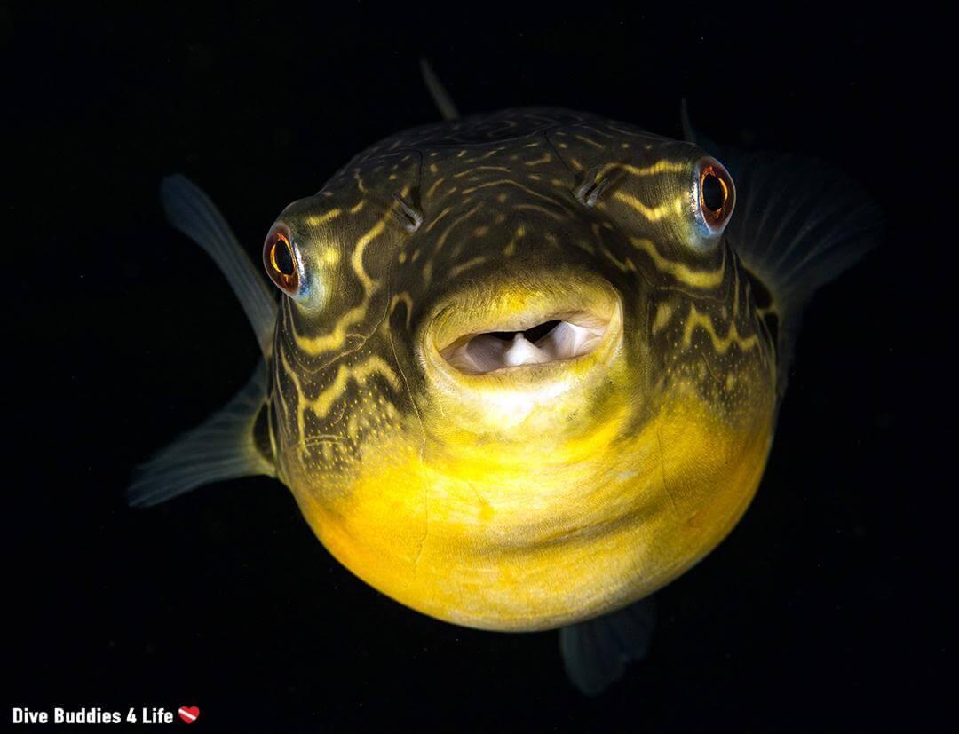 Underwater photographer of the week Ali Postma