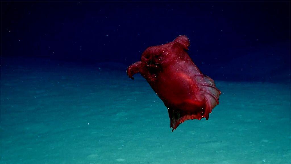 Deep-sea 'Headless Chicken Sea Monster' Filmed Off Antarctica