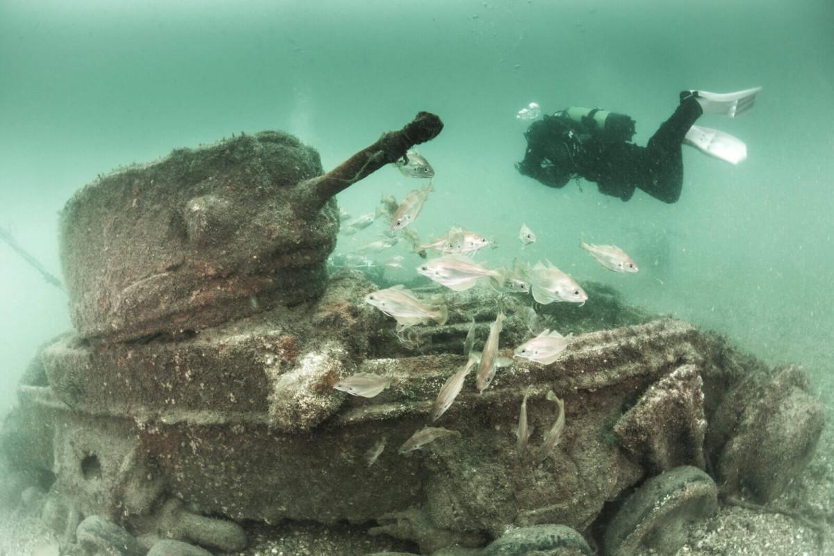 Underwater-Photographer-of-the-Week-Paul-Pettitt-2