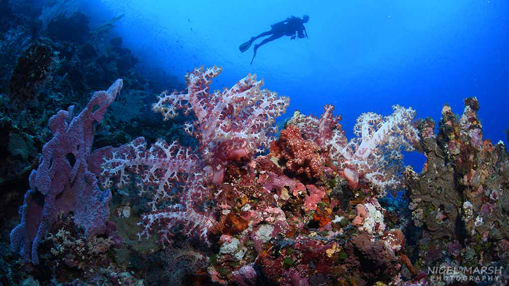 Diving as a Career 9 Jobs to Consider
