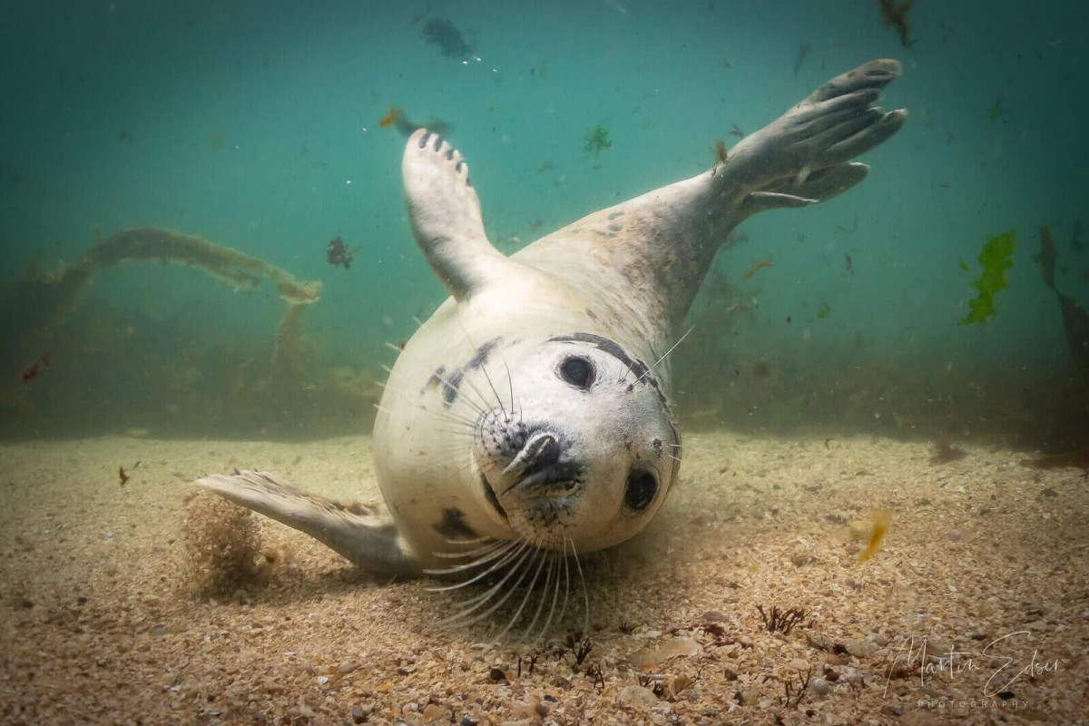 Underwater Photographer of the Week Martin Edser