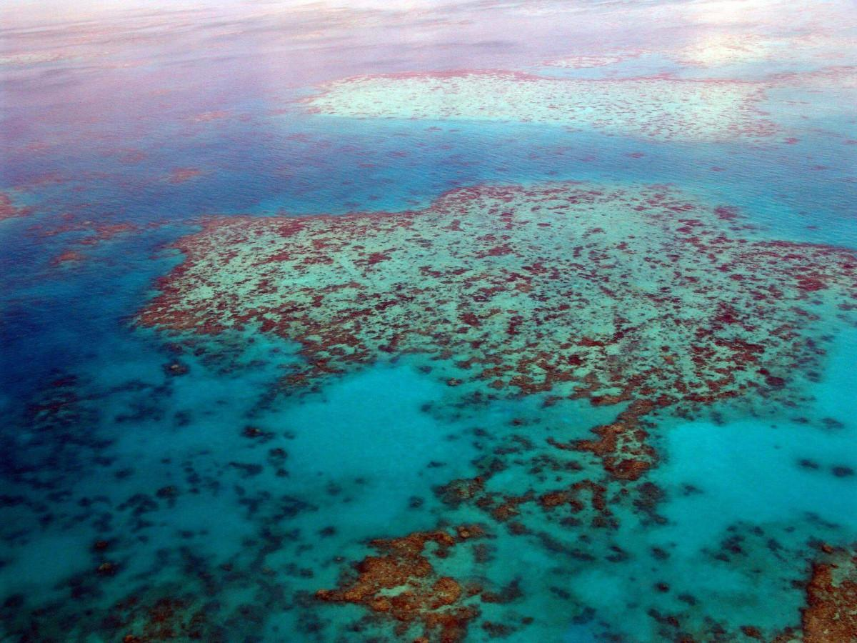 Great Barrier Reef health 'very poor' due to climate change