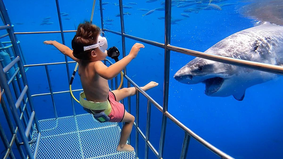 Cage Diving with Great Whites, at 5 years old! 3